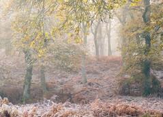The end of Autumn (Tom_Drysdale) Tags: wood autumn november fuji birnam xt2 winter mist frost murthly fog 2016 freezing fujifilm ice
