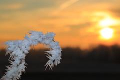 Frosty branch (Bayerwaldteam) Tags: rauhreif frosty sun sonne sunrise sonnenaufgang winter eiskristall ice crystal