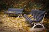 Hagamos las paces (KARNATION) Tags: karnation banco bench benches otoño autumn hojas feuilles gelb amarillo