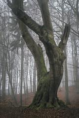 elegant (Diana Klawitter) Tags: jasmunder nationalpark jasmund sassnitz rügen buchen buchenwald