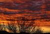 Sunrise 1 19 17 #41 (Az Skies Photography) Tags: sun rise sunrise morning dawn daybreak sky skyline skyscape rio rico arizona az riorico rioricoaz arizonasky arizonaskyline arizonaskyscape arizonasunrise red orange yellow gold golden salmon black canon eos rebel t2i canoneosrebelt2i eosrebelt2i january 19 2017 january192017 11917 1192017