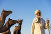 Camel Herder | White Turban (Karunyaraj) Tags: pusharfair pushkar potrait camel camelherder camelfair2016 whitedress whiteturban rajasthan india beard stick sky blue goldentones goldenhour shining cwc cwc561 chennaiweekendclickers nikond610 d610 nikon24120 fx fullframe