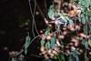 Kingfisher Blending In (jeff_a_goldberg) Tags: sarapiquiriver kingfisher chloroceryleamericana greenkingfisher naturalhabitatadventures nathab winter costarica heredia cr