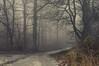Glissade (Netsrak (on/off)) Tags: forst landschaft natur nebel wald fog forest mist nature woods rheinbach nordrheinwestfalen deutschland de