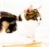 cassie observing (PDKImages) Tags: cat black ragdoll monochrome pet animal feline blackcat asleep eyes calming