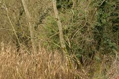 20170104-_IMG0959-Edit (fleetingphotons) Tags: pentaxk1 smcpentaxa200mmf28ed wasingestate fishing warrenbeat kennet trees