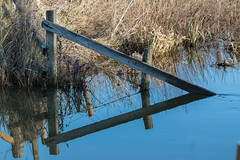 Triangular (Mibby23) Tags: fence water triangle triangular reflection canon 70d sigma 150600mm contemporary