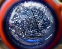 Freeze Frame (davecrev) Tags: hmm inspiredbyasong macromondays