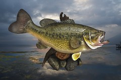 a fish out of water (Pejasar) Tags: memories largemouthbass lake fish bass trophy water caught