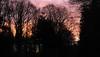 Am Morgen; Bergenhusen, Stapelholm (2) (Chironius) Tags: stapelholm bergenhusen schleswigholstein deutschland germany allemagne alemania germania германия szlezwigholsztyn niemcy himmel sky ciel cielo hemel небо gökyüzü wolken clouds wolke nube nuvole nuage облака morgendämmerung sonnenaufgang morgengrauen утро morgen morning dawn sunrise matin aube mattina alba ochtend dageraad zonsopgang рассвет восходсолнца amanecer morgens dämmerung gegenlicht silhouette baum bäume tree trees arbre дерево árbol arbres деревья árboles albero árvore ağaç boom träd