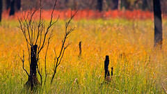 on fire (Dianne M.) Tags: nature st marks fields color pattern abstract outside florida