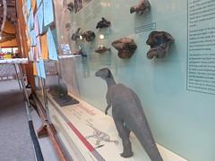 left behind iguana (cleanskies) Tags: ounhm oxfordnaturalhistorymuseum museum tyrannosaur chicken giantchicken skeleton