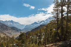 Mountains and Pine Trees (Ali Sabbagh) Tags: trees mountains nepal himalayas annapurna canon eos7d nature landscape travel world