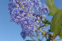 D174710A (RobHelfman) Tags: losangeles flowers kennethhahnstaterecreationarea