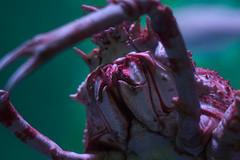 Sea Live - Timmendorfer Strand (noise-fotografie.de) Tags: fish germany deutschland aquarium tiere thringen sealife location thuringia land orte region pisces schleswigholstein krabbe ort fische timmendorferstrand unterwasserwelt krebse zellamehlis meeresaquarium erlebnispark gliederfsler urlaub2015