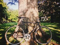 Park Pit Stop (pavementgraveldirt) Tags: steel cx surly 56 gravel cyclocross cromo crosscheck 4130
