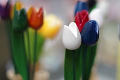 Wooden tulips (joelaratta) Tags: 50mm pentax 14 fa k30