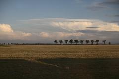 zugfahrt_e-m10_1009033141 (Torben*) Tags: clouds landscape wolken treeline zugfahrt landschaft harz trainride baumreihe rawtherapee olympusm25mmf18 olympusomdem10