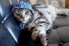 DSCF6390 (catfish.boogie) Tags: japan cat sapporo hokkaido xe2 xf35mmf14r