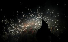 Stars fly away (Mariña Veras) Tags: barcelona light luz night stars noche fiesta estrellas noite silueta cataluña correfoc oscuridad mercè figura catalán fiestasdelamercè