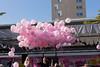 EOS 6D_4292 (Christian Rasmussen-Sand) Tags: against day breast cancer sigma danish lørdag 70300 lyserød