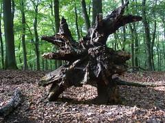 R0023187 (joachimelbing) Tags: alraune adlerhorst geotop oberlemp