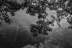Mekkarrai (vinothrajas) Tags: blackandwhite bw india snow abstract mountains tree clouds forest blackwhite leaf border kerala leafs tamilnadu tenkasi nikon5100 reservedforest sengottai achankovil mekkarrai