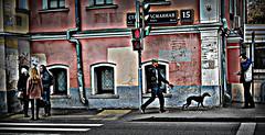 (luchiki1) Tags: road street city people blackandwhite dog house black building bus texture water girl monochrome field car skyline architecture night train river town photo spain alley labrador metro russia outdoor moscow background taxi capital border surreal tram serene avenue russian depth federation sokolniki          finik  gleb             luchiki1  luchay