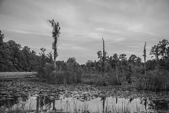 (itsbrandoyo) Tags: sunset sc nature landscape wildlife southcarolina wetlands riverfront marsh goosecreek charlestonsc bushypark lowcountry marringtonplantation marshfront