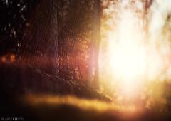 HFF (Photographordie) Tags: light sunset fence dof bokeh olympus foreground hff olympuspenepm2 samyangasphericalif85mmf14