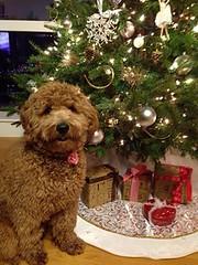 koda-christmas-ready-to-meet-santa-_11367338655_o