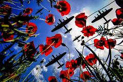 POP0010 (Smart Aviation Art) Tags: poppy poppies poppyfield poppyfields lancaster vulcan avro spitfire hurricane aircraft military bbmf