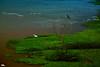 Herons (Otacílio Rodrigues) Tags: herons garças rio river árvore tree vegetação vegetation água water voo flight pássaros birds resende brasil oro galhos branches