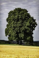 Twin Oaks ([AUT]side) Tags: tree twin oak crossing landscape outdoor