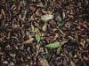 013_Nostalgia (David Valarezo Roca) Tags: quito ecuador exterior color creativo hojas nostalgia fotografía textura photography fujifilm x30 trama conceptual contraste