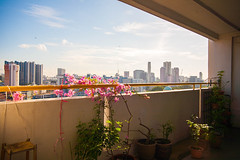 Everyday View (HaIogen) Tags: canon canon5dmk1 sigma1530mm sky clouds horizontal buildings hdb plants