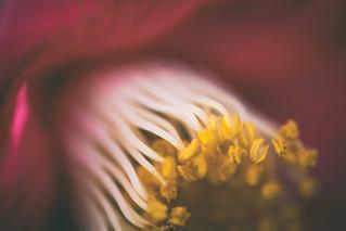 """""""Winter Bloom"""" Haiku"""