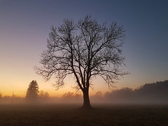 Hibertnation (Ben Heine) Tags: arbre beauty branches evening hibernation hiver landscape nature night photography season silhouette sunset tree winter majestuous smartphonephotography benheinephotography