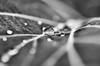 Silver glow (spiegelbilder.de) Tags: spiegelbilderde braunschweig bnw blackandwhite scharzweiss monochrom makro macro textur bokeh schärfentiefe
