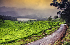 God's own country... (The Canon Fanboy) Tags: kerala munnar landscape nature canon india photography travel clouds greenery roads explore
