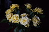 DSC_4215 Bouquet of Yellow Roses (PeaTJay) Tags: nikond750 reading lowerearley berkshire macro micro closeups gardens indoors nature flora fauna plants flowers bouquetofroses rose roses rosebuds