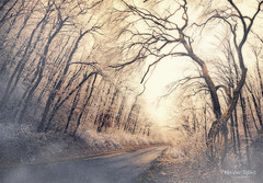 (heizer.ildi) Tags: winter month mood code beat trees wood cold rime canon 600d nature forest light lights sigma