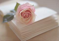 Love Story.. (KissThePixel) Tags: pastel pastels macro rose pink flower flowers book story love romance stilllife stilllifephotography nikondf nikon sigmaart sigmaf14 f14 aperture creativeart art fineart