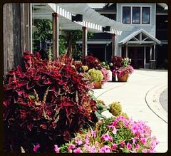 At the North Carolina Arboretum (mystuart) Tags: door building museum geotagged nc asheville entrance arboretum container pots petunia potted coleus pergola bentcreek