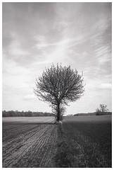 *** (Spartaxus) Tags: sky blackandwhite bw cloud tree monochrome field analog pentax kodak outdoor analogue tmax100 mesuper mazovia ciechanów
