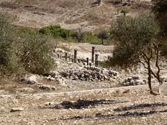 اثار في القويلبة (fchmksfkcb) Tags: jordan romanempire jordanien römer pella gadara romanruins ummqays abila tabaqatalfahl quwaylibeh