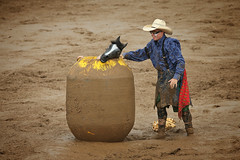 CalgaryPoliceRodeo2015-BullRiding-504 (calgarypolicerodeophotos) Tags: horse calgary race bareback sheep barrel police bull racing poker rodeo calf bullriding chute mutton saddle bronc steerwrestling barrelracing saddlebronc cpra chutedogging