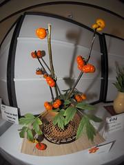 "Pumpkin & Peony leaves by Emiko Unno ""Koryu School"" (nano.maus) Tags: fisheye lauritzengardens japaneseflowerarrangement omahabotanicalsociety japaneseambiencefestival"