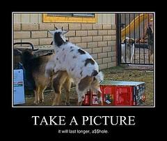 Goats Prefer Privacy (Chikkenburger) Tags: posters memes demotivational cheezburger workharder memebase verydemotivational notsmarter chikkenburger