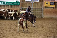 BJ1A8599 (yoann.coin) Tags: horse france western cutting ncha remoray